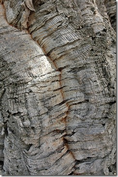 bark_cork_oak