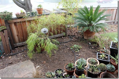 110123_front_porch_succ_area