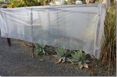110203_rbg_covered_aloe_striata