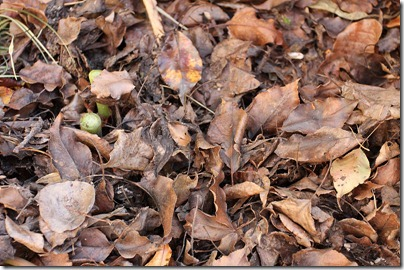 110213_tropical_bed_leaves