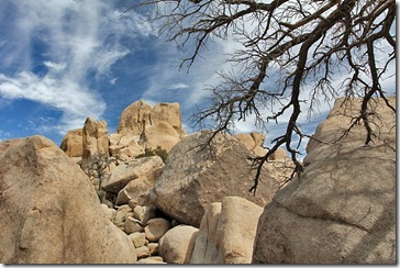 110221_joshua_tree_np_rocks_tree_branch
