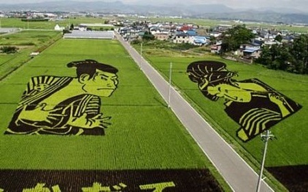rice-paddy-art (9)