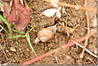 details-late-spring-snail