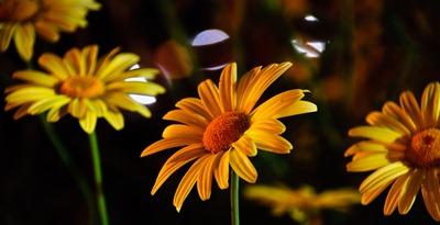 random-flowers