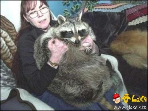 fat-animals-5