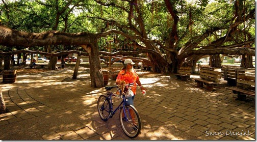 Biking under the Banyan tree