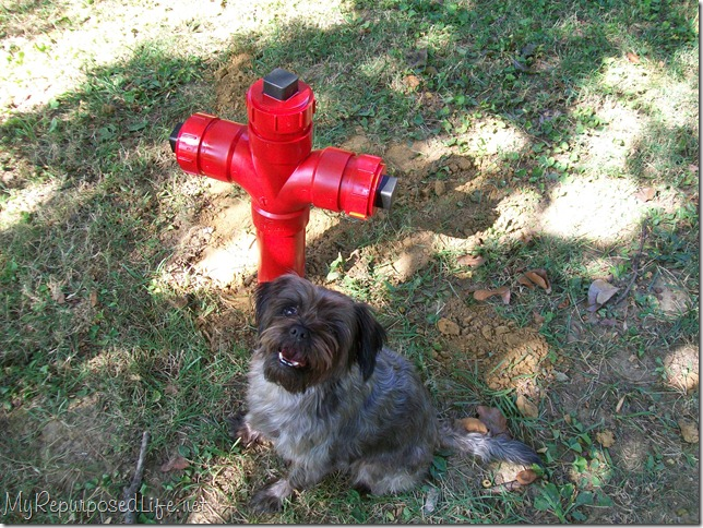 doggie fire hydrant yard art