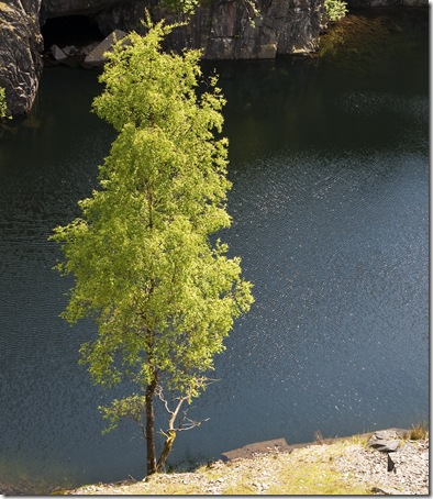 sunlit tree afternoon bannishead quarry nr torver lake district