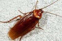 Тараканы побывали в космосе