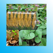 Chinese Herbs Healing