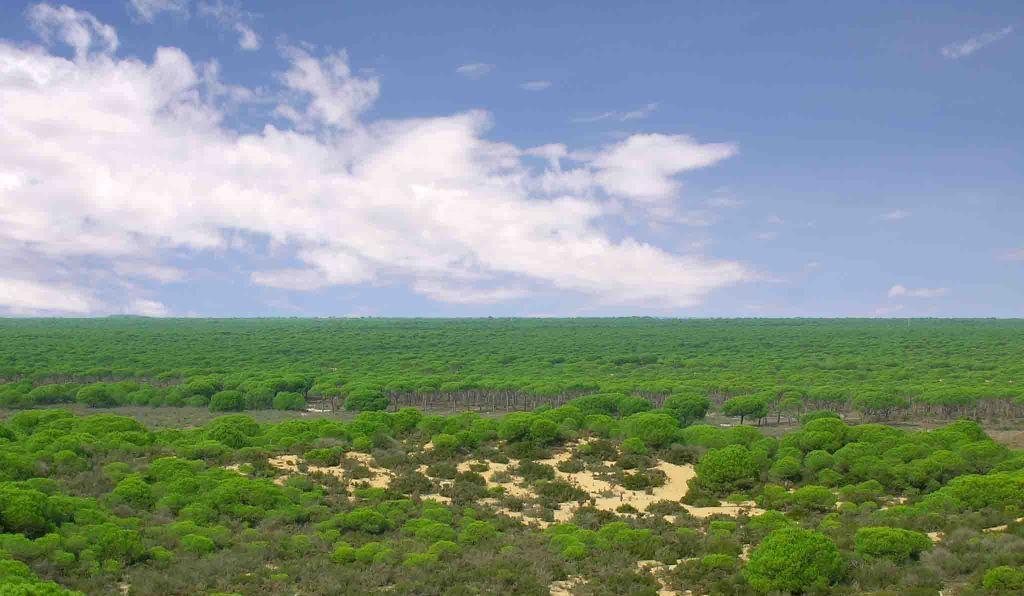 Laguna del Jaral, Doñana