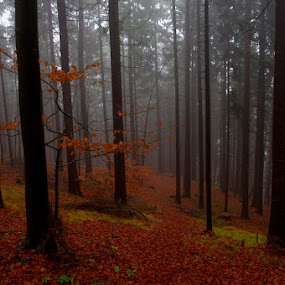 by Lidija P - Landscapes Forests