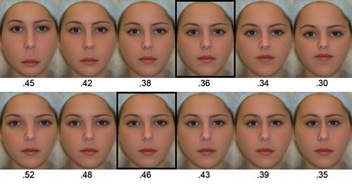 misure ideali di una faccia femminile