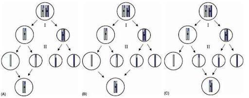 Arrhenotokous parthenogenesis asexual reproduction