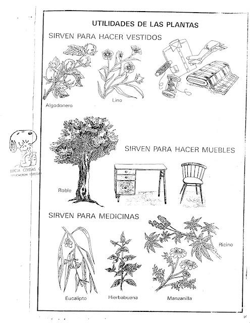 Fichas Utilidades De Las Plantas