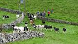 The locals in Longnor saying hello