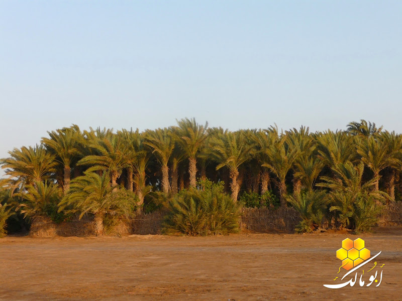 مكان جديد من اليمن السعيد . . . الخوخه 113.JPG