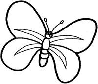 jyc mariposas (13)