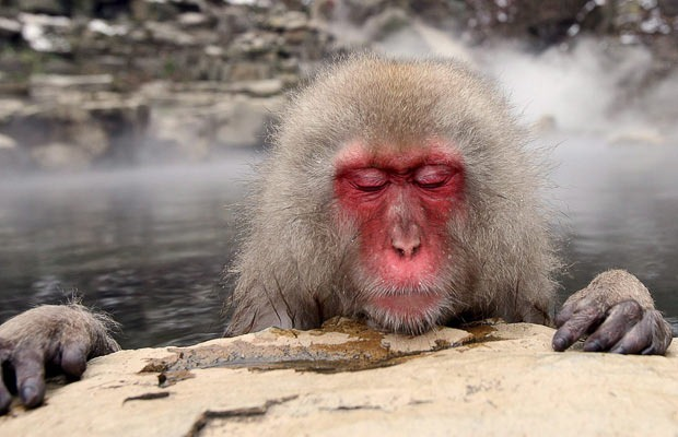 snow-monkeys (4)