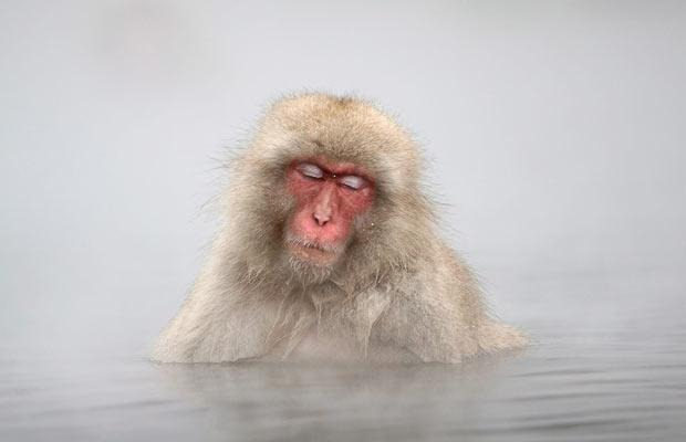 snow-monkeys (5)