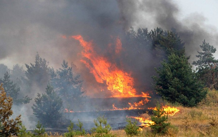 russia-forest-fire (16)