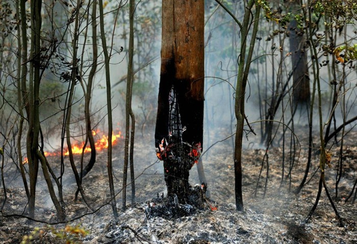 russia-forest-fire (17)