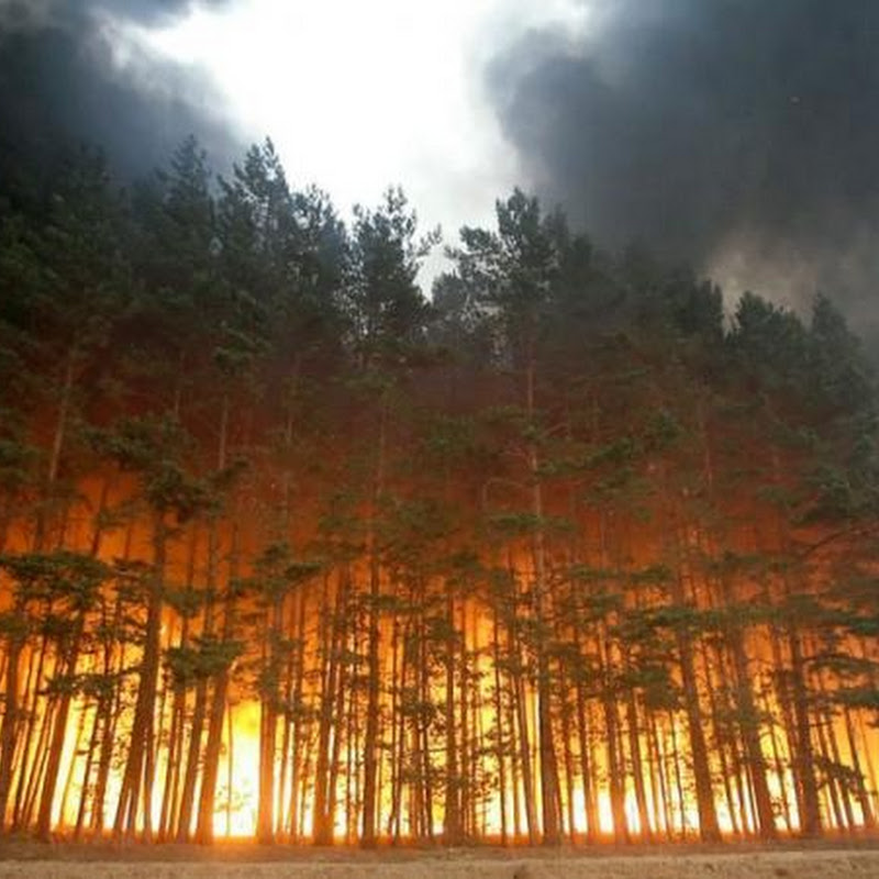 Forest Fire in Russia