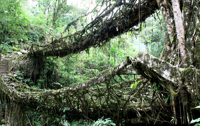 root-bridges (2)
