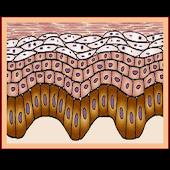 Test de Dermatología