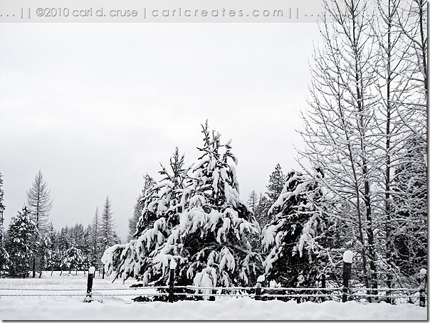 Winter Wonderland on Moose Trail Acres