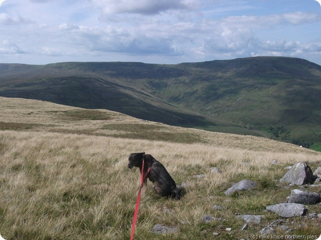 pensive dog second cairn
