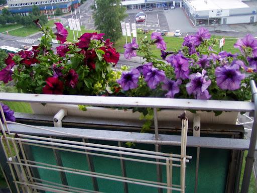 Rośliny Na Wietrzny Balkon