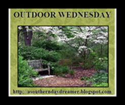 OutdoorWednesdaybutton543333333