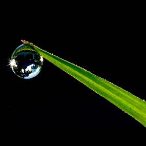 by Sandi Kun - Nature Up Close Natural Waterdrops