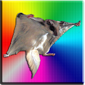 Flying Squirrel Donate icon