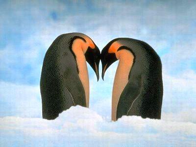 Imagenes para Dedicar con Amor