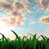 Swaying Grass Live Wallpaper