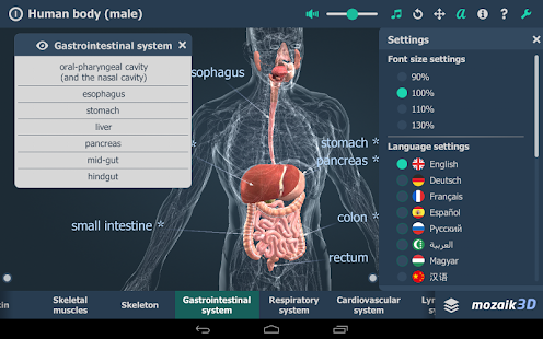 human body (male) vr 3d - android apps on google play, Muscles