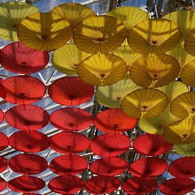 A ceiling of umbrellas by Dianne Collins - Buildings & Architecture Other Interior