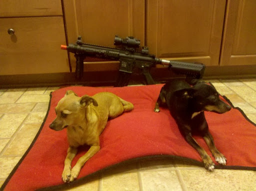 Airsoft Guns, VFC HK416 CQB, Custom Airsoft AEG, Airsoft Arsenal Guard Dogs, Pyramyd Airsoft Blog