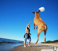 Dog jumping while man is holding stick