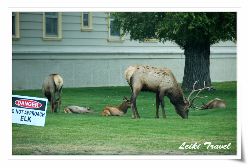 Danger! Do not approach ELK!