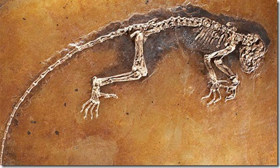 fosil lagarto 2