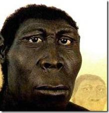 erectus2