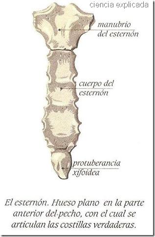 huesos planos