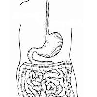 Imagenes Del Aparato Digestivo Para Niños
