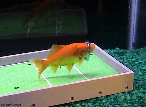 Ada ikan ter-cerdas didunia, benarkah?