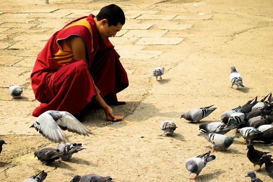 Feeding pigeons by Gyan Fernando - City,  Street & Park  Street Scenes ( pigeons, buddhist monk, monk, buddhist, gyan fernando, mongolia, ulaanbator, feeding birds, birds )
