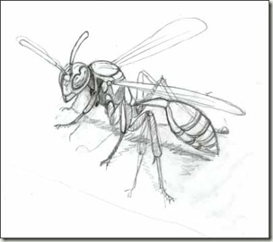 Eaves besides Yellow Jacket Anatomy moreover Topic43stings additionally 2010 01 01 archive furthermore Life Cycle Of A Yellow Jacket. on paper wasp nest