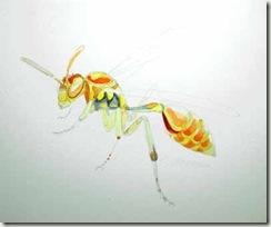 wasp startsm